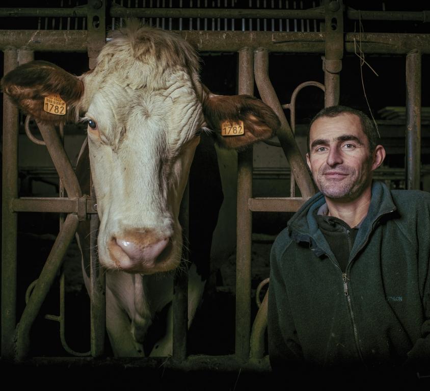 La vache et le paysan